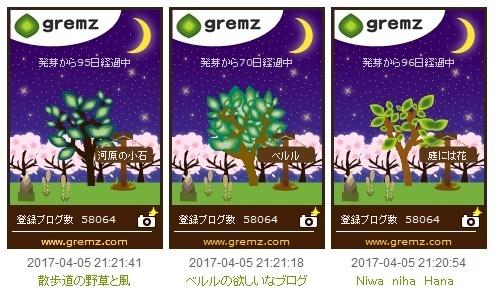 20170405桜3つの苗_494.jpg